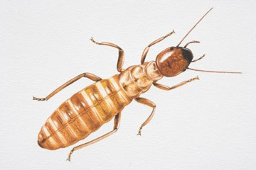 Truly Nolen's Termite Identification Kit