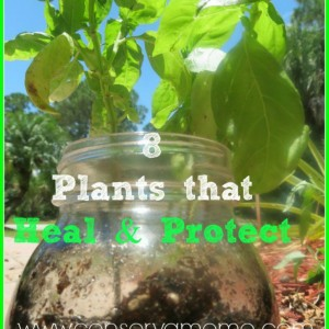 8 Plants that Heal & Protect