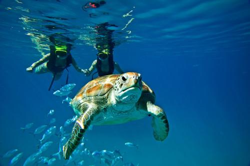 Colony Club SUP Turtles