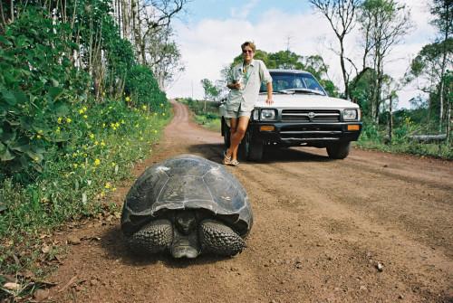 Ecoventura Giant Tortiose Galapagos