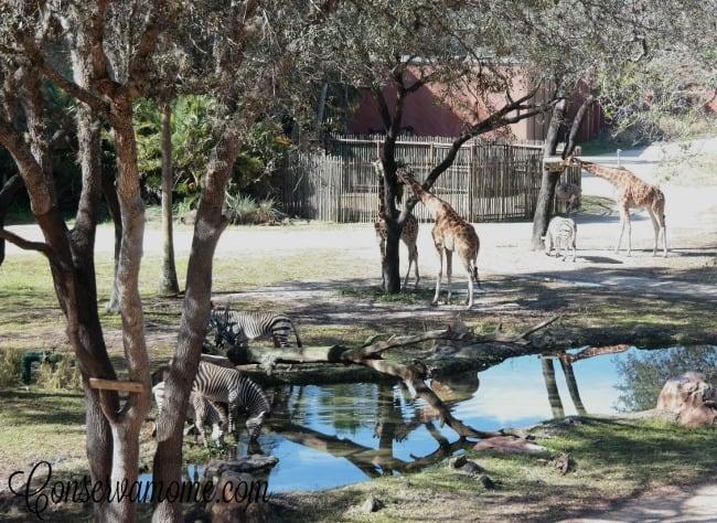 Animal Kindgom Lodge