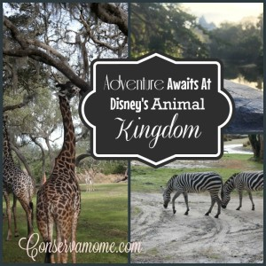 Adventure Awaits At Disney's Animal Kingdom