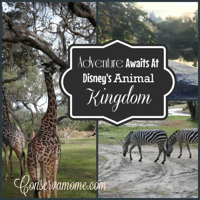 Disneyanimalkingdom