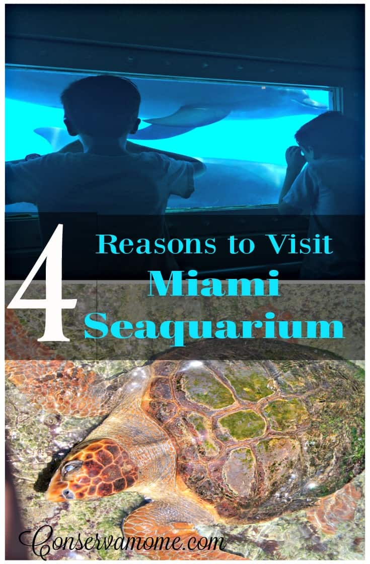 There are so many things to do and see in Miami,FL. Here are 4 Reasons to Visit Miami Seaquarium and make it a must stop on your list.