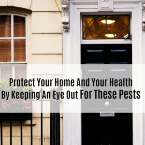 Protect Your Home And Your Health By Keeping An Eye Out For These Pests