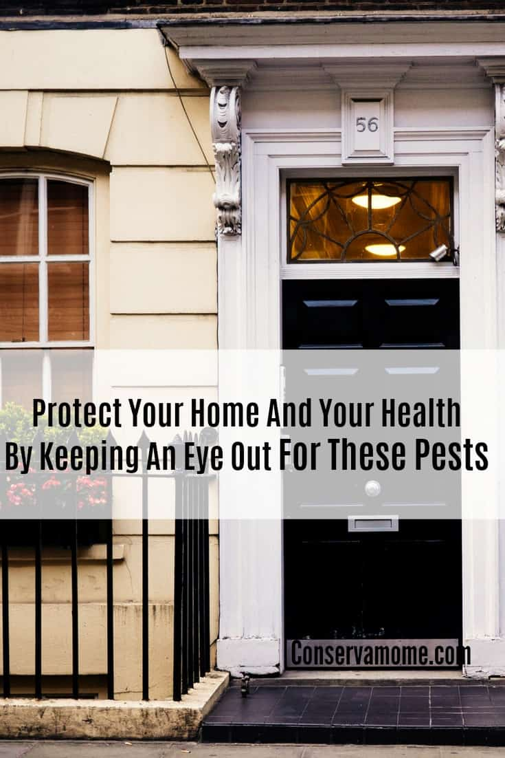 Make sure and protect your home and health by keeping an eye out for these common pests.