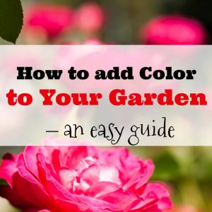 How to add Color to your Garden- An Easy Guide