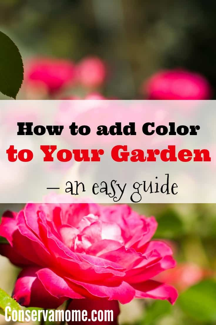 This is an easy guide to help you add color to your garden. Perfect for when it's time to start planning next seasons garden!