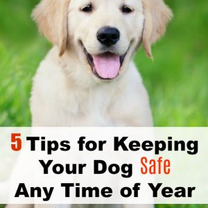 5 Tips for Keeping Your Dog Safe Any Time of Year