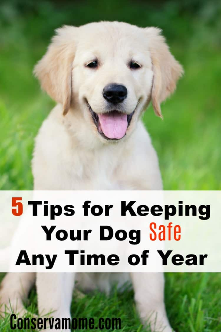 We all want to keep our dogs safe year round. So check out 5 Tips for Keeping Your Dog Safe Any Time of Year and make sure they live a long happy life out our side.