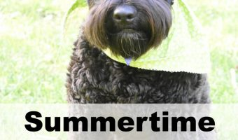 Summertime Safety Tips for Dogs + PetArmor Sweepstakes!