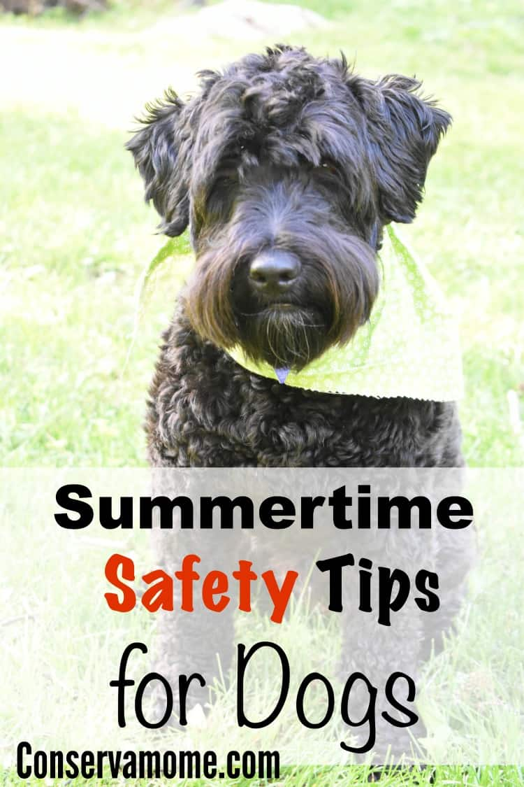 We look to dogs for companionship and love, the give us a lot of it unconditionally. That's why it's important to keep them safe as much as we can. With warmer weather around the corner it's important to keep them safe. Check out some Summertime Safety Tips for Dogs.This post is sponsored by PetArmor, but opinions expressed are my own.