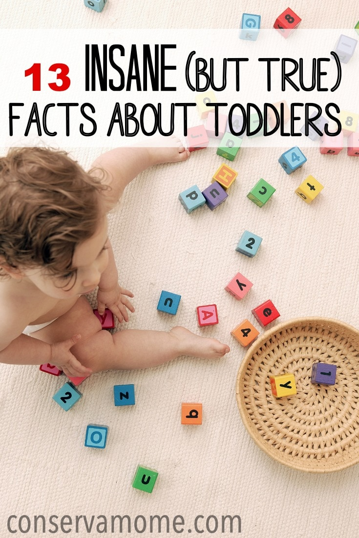 Does your toddler baffle you? Understanding toddlers can be tough. Especially when half of the things they do have no rhyme or reason. That's why I've put together a list of 13 insane (but true) facts about Toddlers to help you understand why they do what they do.