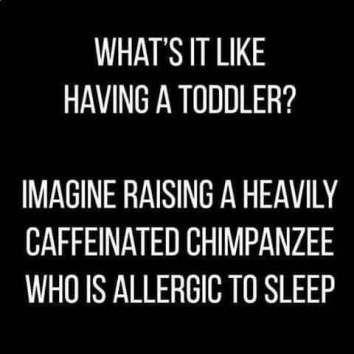 funny Toddler Meme