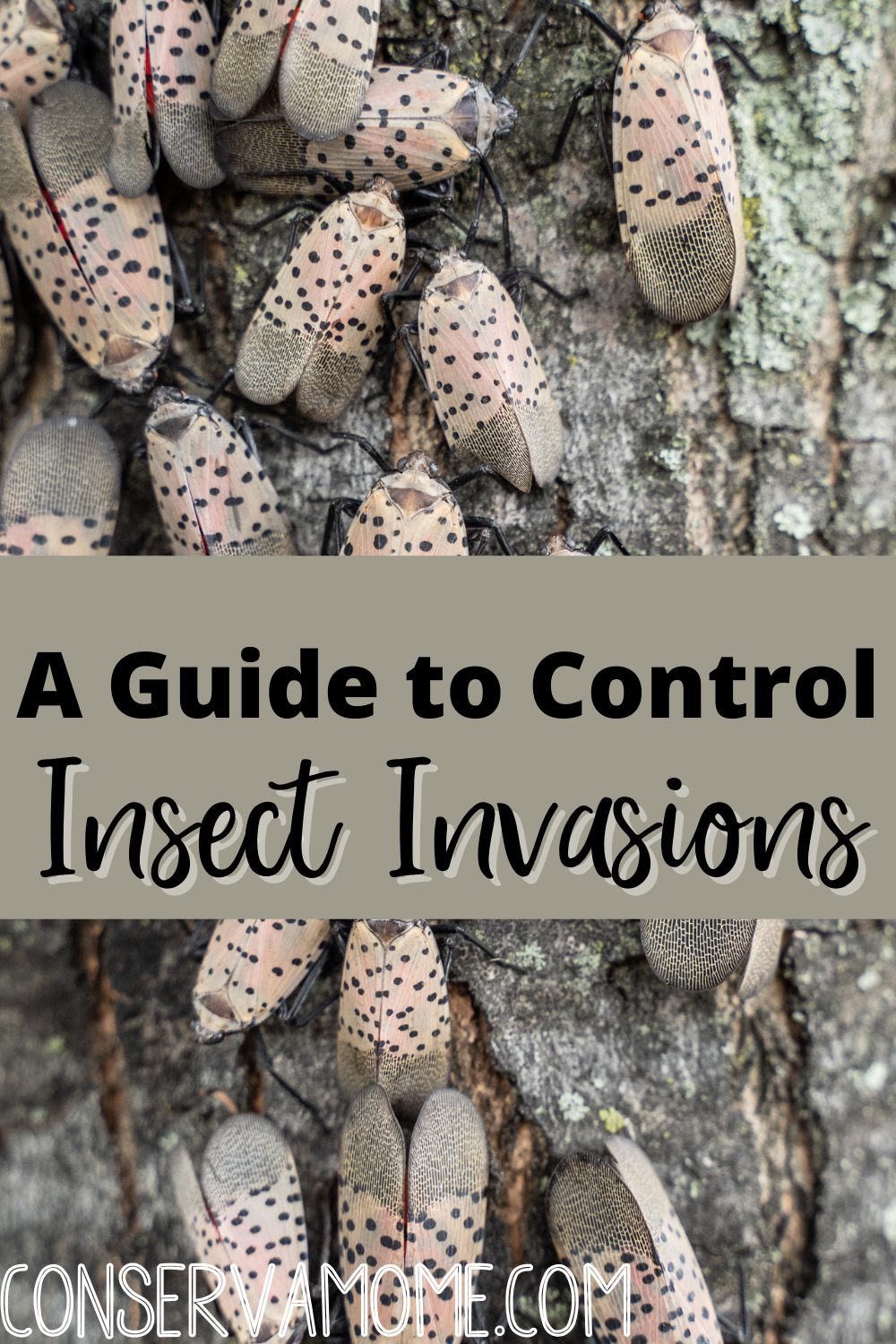 A Guide to Control insect invasions