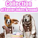 The Best collection of Easter Jokes around