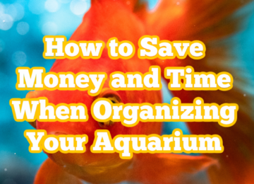 How to Save Money and Time When Organizing Your Aquarium