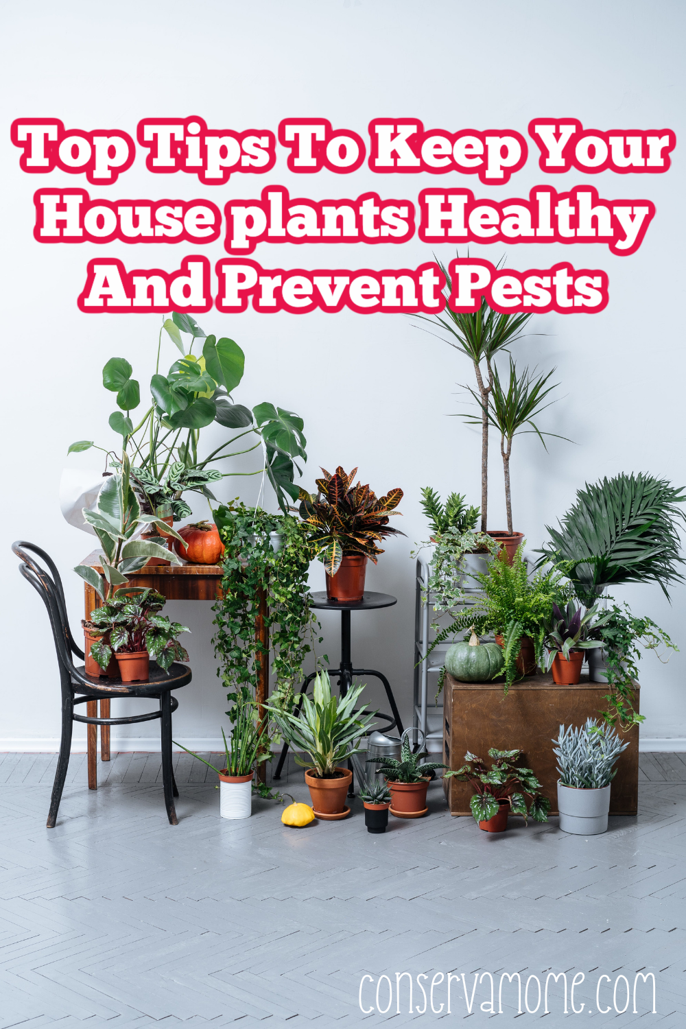 Top Tips to Keep your house plants healthy and prevent pests