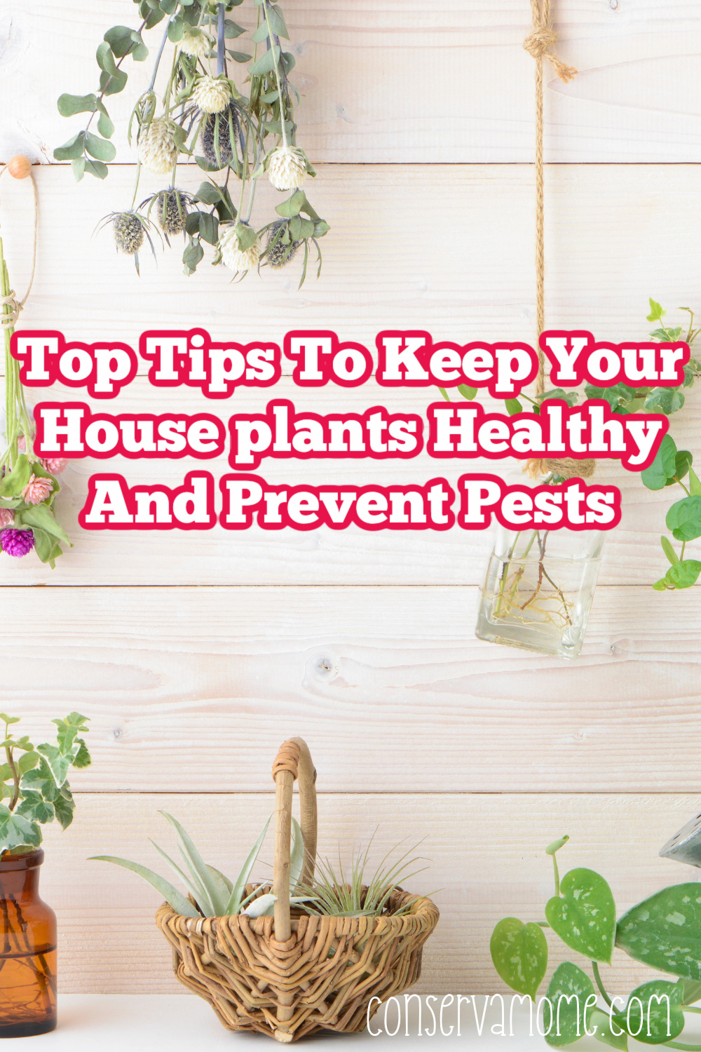 Top tips to keep your houseplants healthy and prevent pests