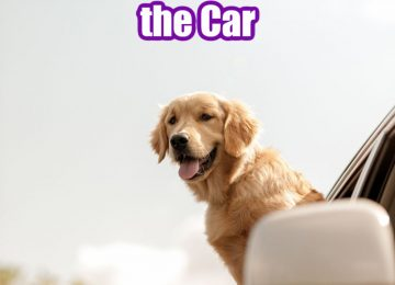 The Top Locations You Can Take Your Dog in the Car